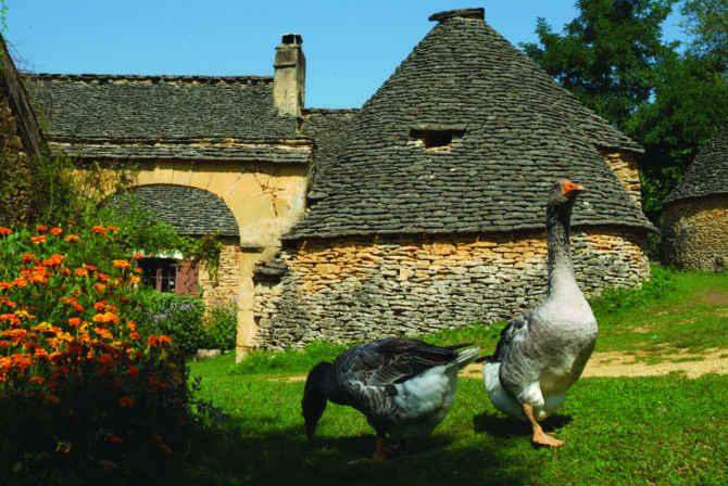 Flocking to Sarlat's annual goose festival