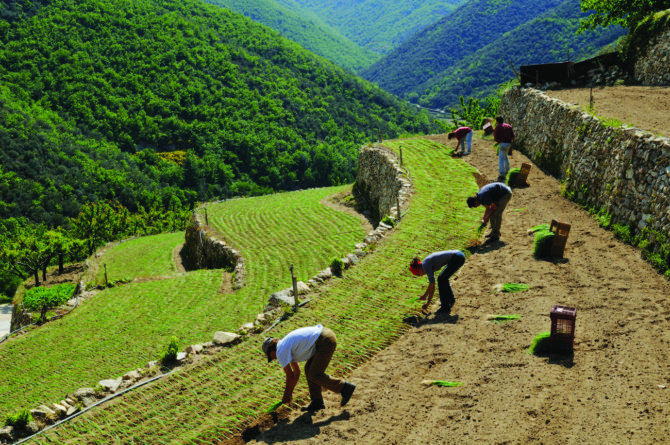 The ABCs of AOC: France's most prized produce