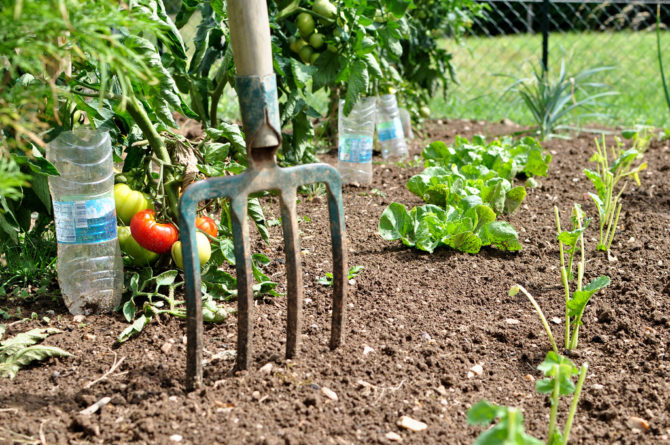 Grow your own vegetables in France