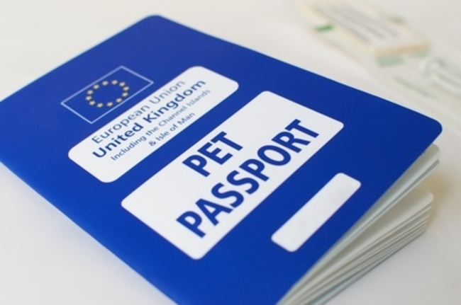 Pets and Pet Passports in France After Brexit: 2021 Onwards