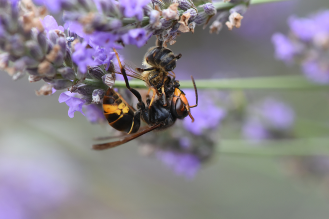 French News Weekly: Cancelled Sports, Grounded Flights and Asian Hornets