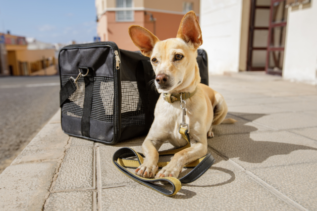 Can I travel with pets during the Covid-19 pandemic?