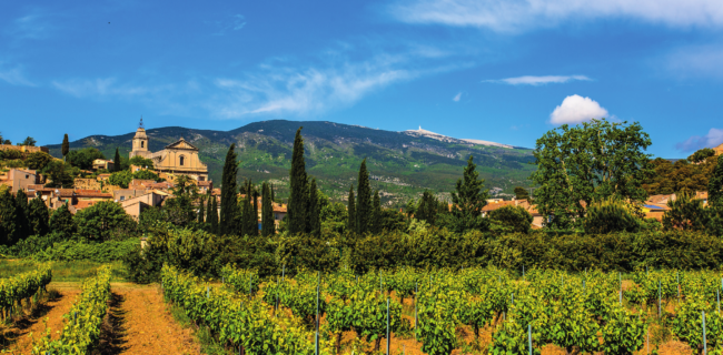 Lifestyle Case Study – Business Endeavours in Provence