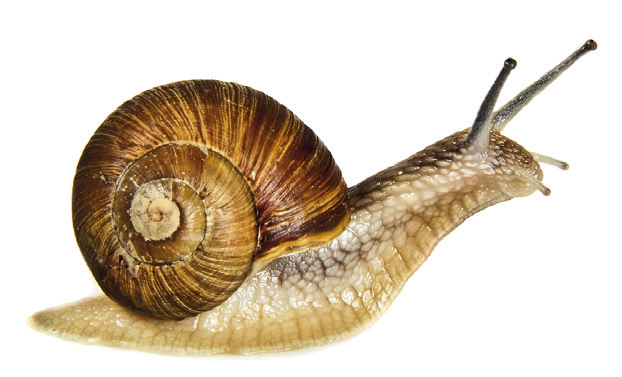 Farming at a Snail's Pace