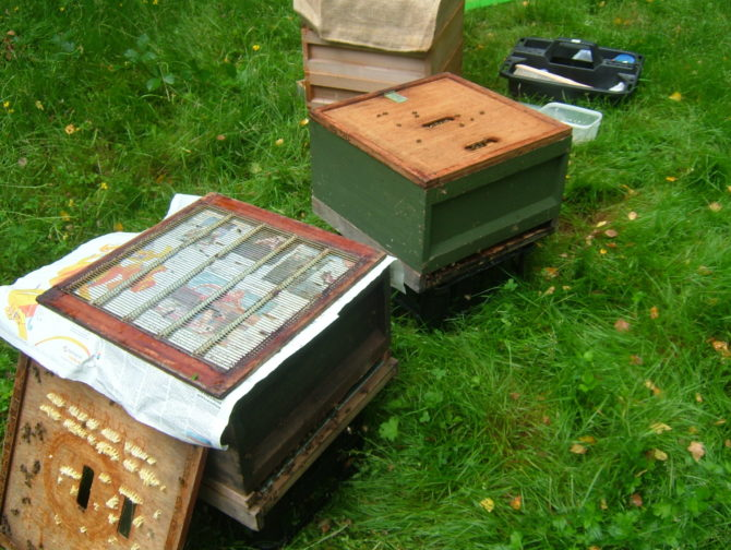 Beekeeping in the Charente – Winter Preparations