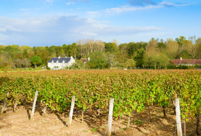 Property Update: Top Tips on Buying a Vineyard