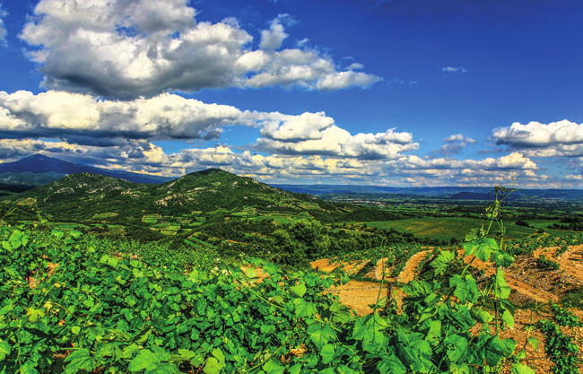 Guide to Buying a Vineyard in France