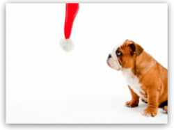 Will your pet enjoy a holiday with you?