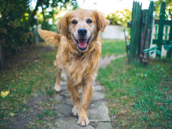 Rehoming Pets: Adopting a Dog or Cat in France