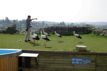 Bird Display Vienne