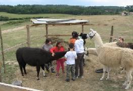llamas with children