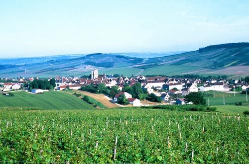 Vineyards in Auxerre Burgundy