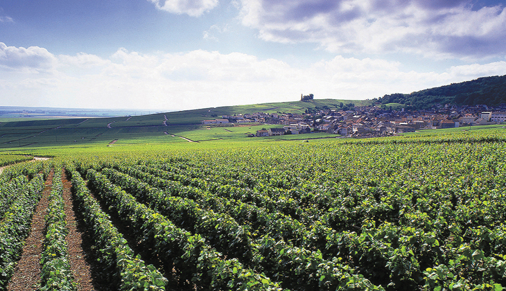Modern Champagne vineyard
