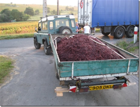 Trailer of grapes