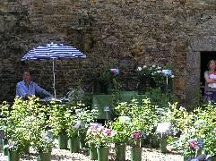 rose nursery pic 1
