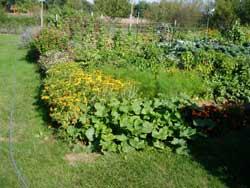 The Limousin August garden