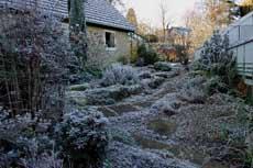 garden frost