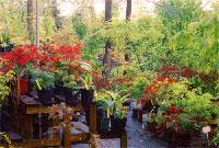 pepiniere (garden centre)
