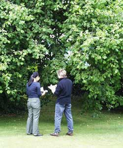 tree surgery and garden planing
