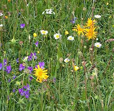 French wildflowers