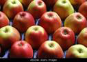 Limousin Apples