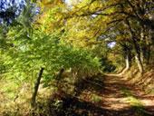 2-a.brittle-typical-woodland-walk-haute-vienne