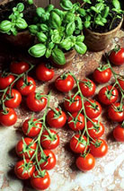 6-tomato-and-basil