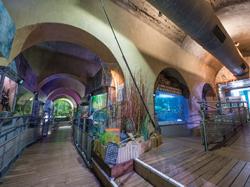 aquarium limoges