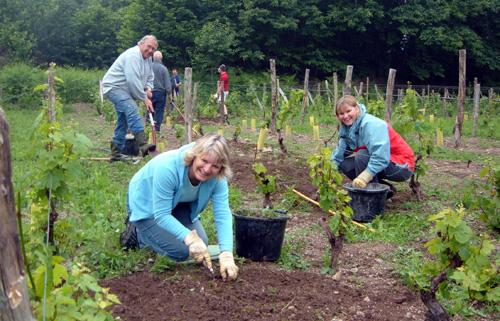 Vineyard Group at work