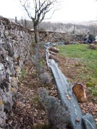 The Celtic Herbalist's Gardens