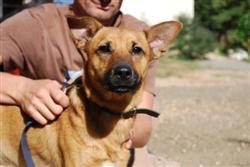 Dog Refuge in Figeac - Les Chiens de Figeac