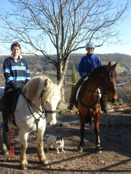 Horses in the Quercy