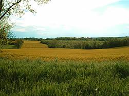FilHol - Rapeseed Field