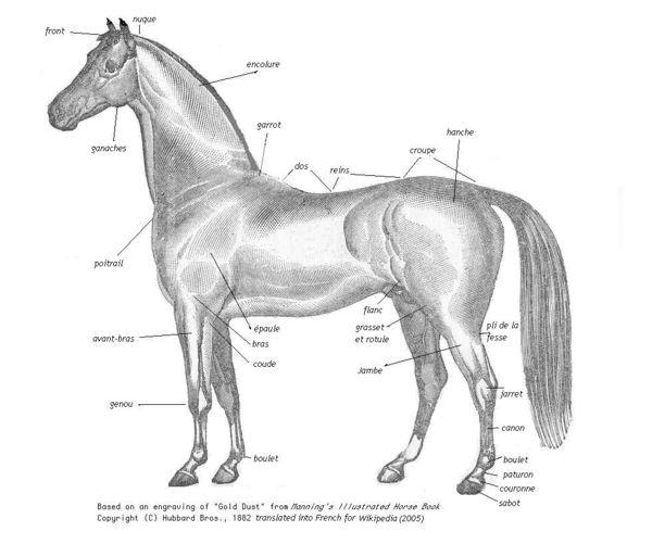 Equestrian vocabulary