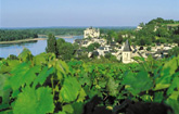 On the Wine Trail