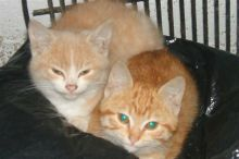 Simms cats