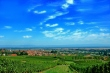 Alsacian vineyard