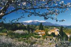 views of Mount Canigou from Ceret