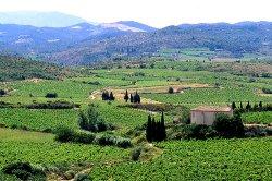 vineyards in the Corbieres