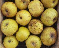 Reinette apples