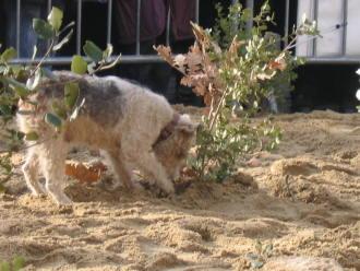 truffle dog cavage uzes truffle market